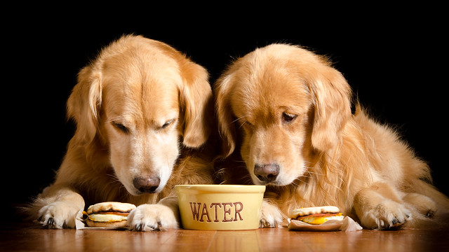 Why Do Dogs Gulp Their Food
