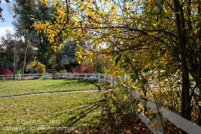 2016.10.31-Garden38