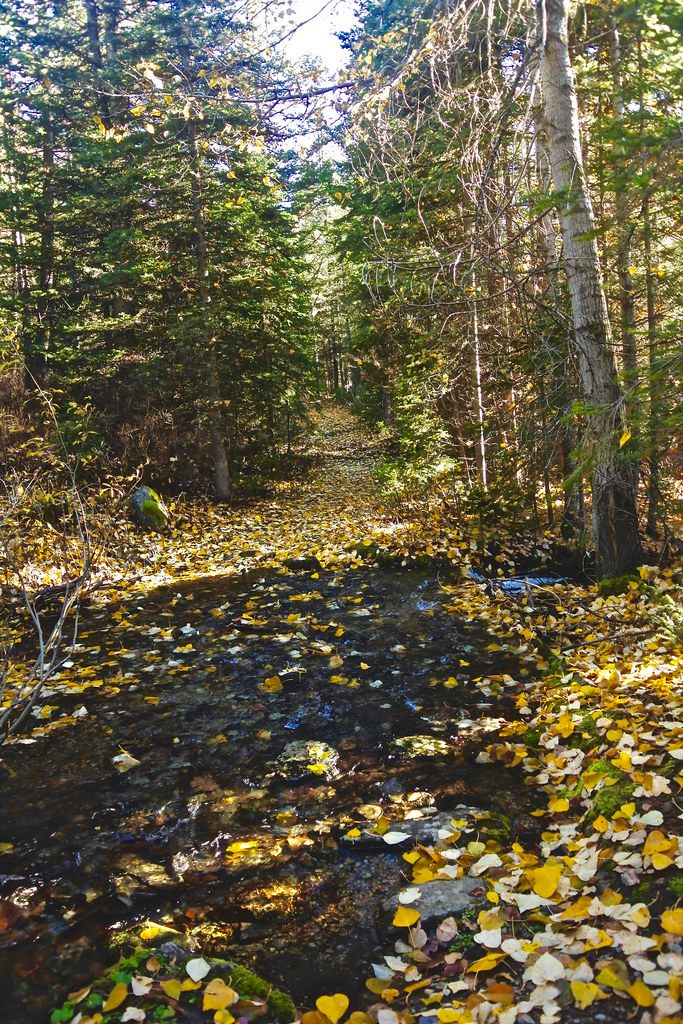 Cabin Lake trail 7