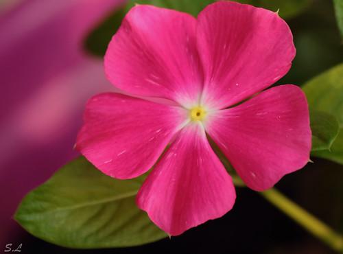 """""""El sentimiento es una flor delicada, manosearla es marchitarla"""""""