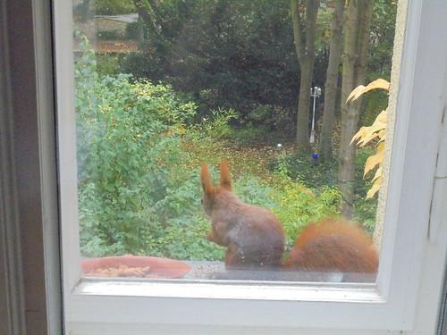 Eichhörnchen im Oktober
