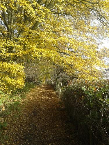Dollis Valley Greenwalk