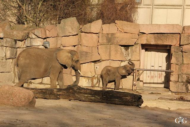 Tierpark Friedrichsfelde 20.11.201614