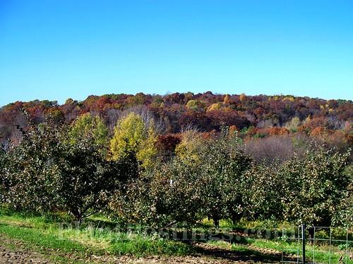 oakwood trees 2