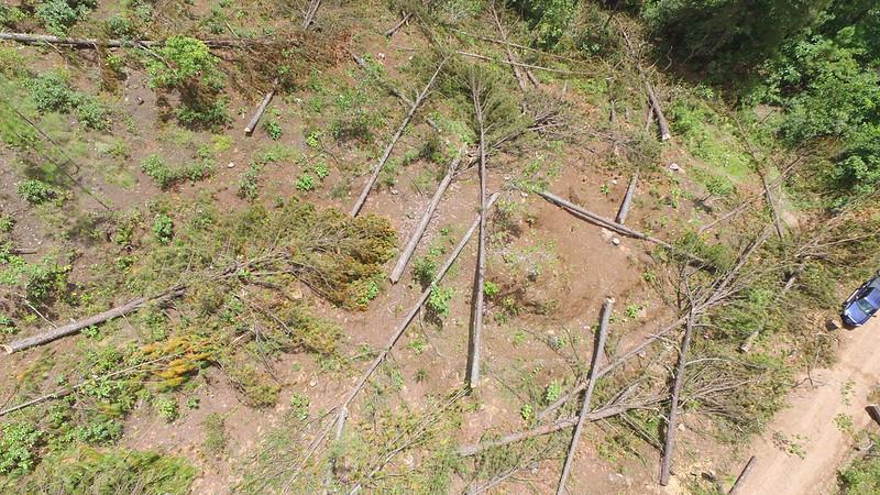 Lucha contra el gorgojo descortezador del pino(07/09/2016)