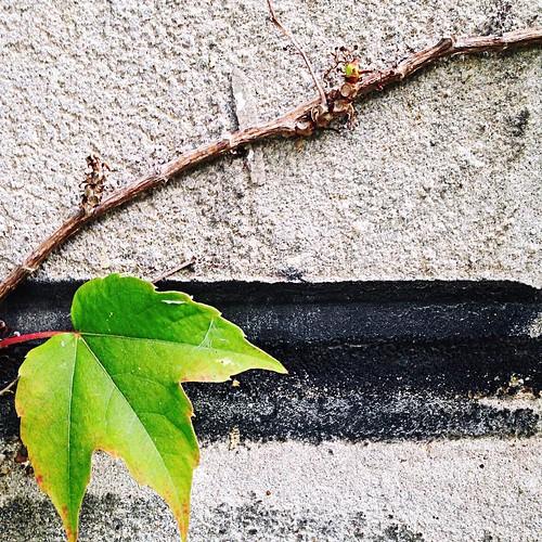 October 27 - Leaf