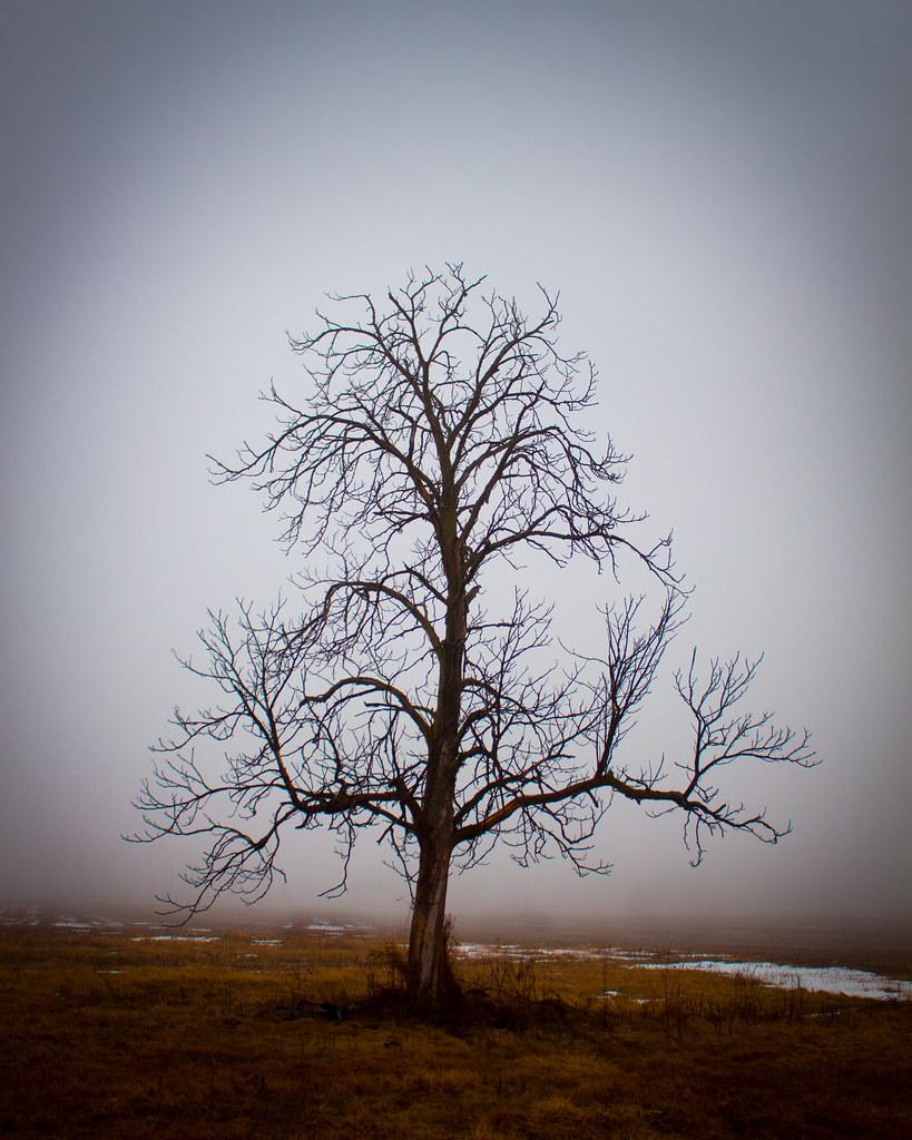 Alone in Fog