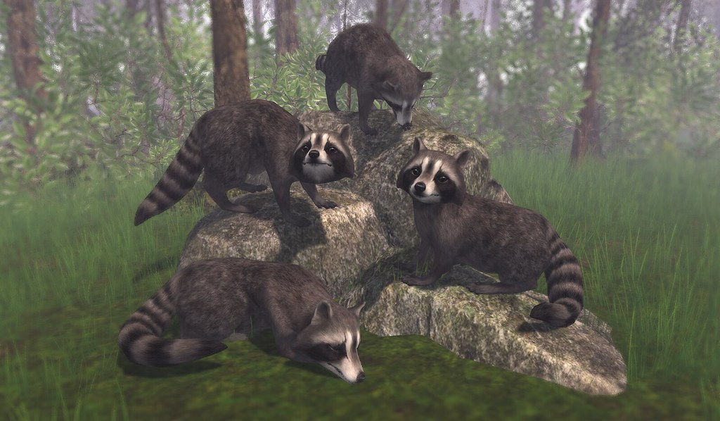 Raccoon Collection (FaMESHed Nov)
