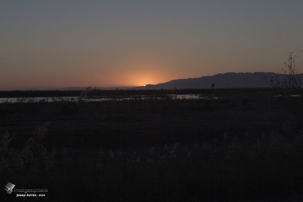 Posta de Sol a la bassa de l'Alfacada