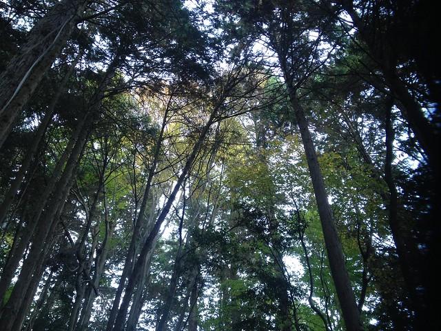 朝倉山 真禅院ルート 森の様子