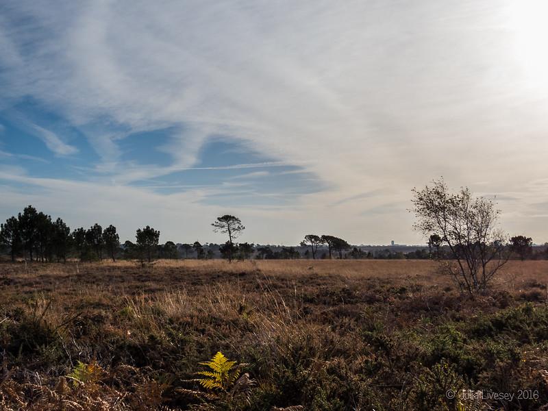 An Autumn morning on Canford Heath