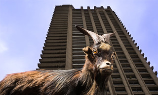 Goat_The Gulch