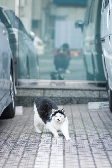 鏡に映り込んだ人間とネコのツーショット写真