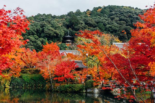 Kyoto_Eikando_04