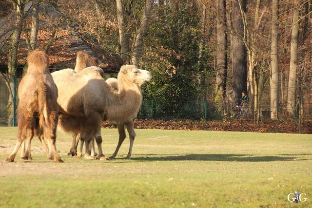 Tierpark Friedrichsfelde 20.11.201619