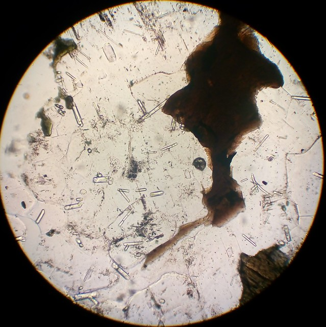 Apatite together with biotite (30 µm thin section, PPL)