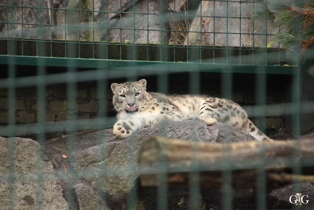 Tierpark Friedrichsfelde 20.11.201634