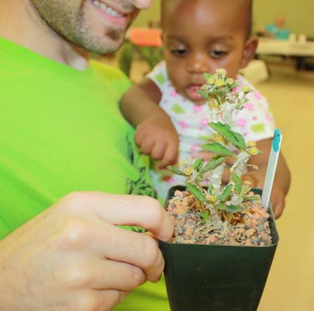 Investigating a Euphorbia