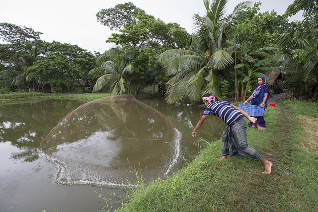 Fish farmer casting a net in Khulna, Bangladesh. Photo by Yousuf Tushar.