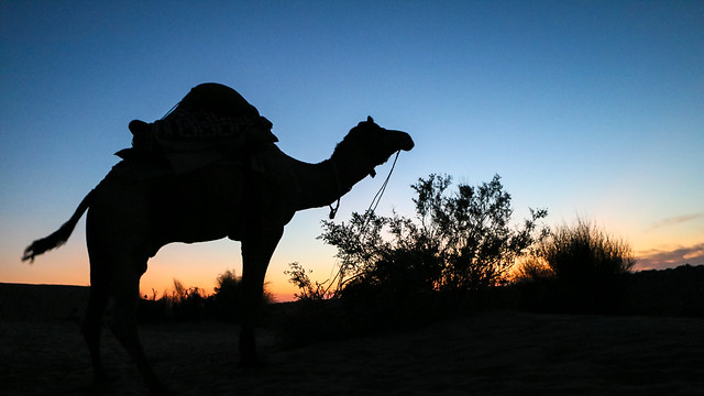 Silhouette of a camel after sunset, Khuri sand dunes near Jaisalmer, India ジャイサルメール、クーリー砂丘 日没後の空とラクダのシルエット