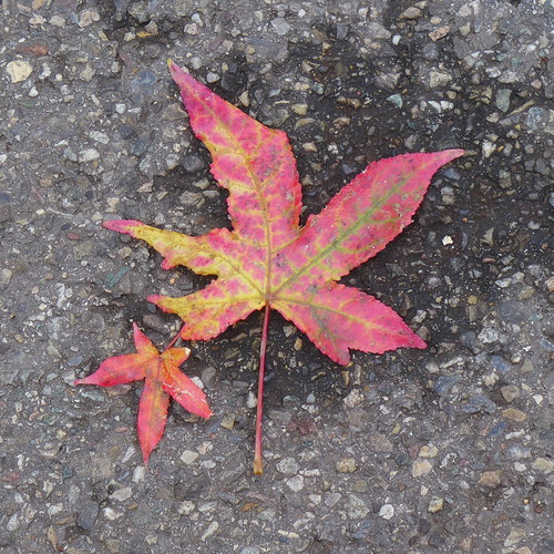 leaves lying on the road