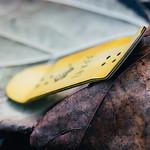 Yellowood - Magic Fingers