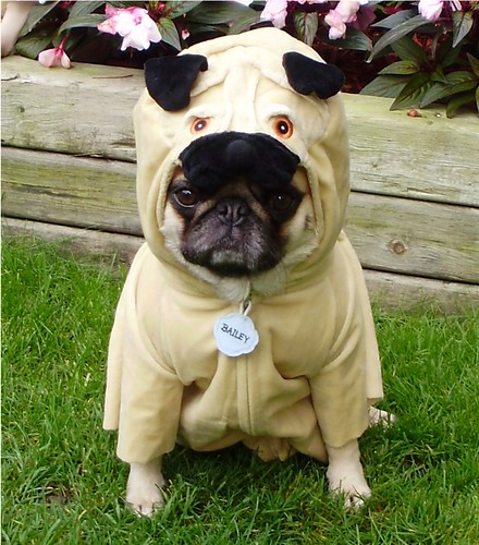 Pug In A Pug Costume 'Pugception' | by DaPuglet