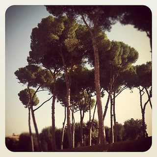 Trees in Rome | by Elissa @ 17 and Baking