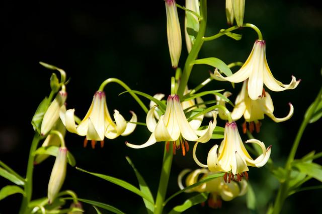 UBC Botanical Garden-13