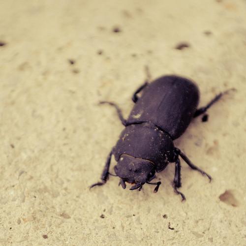 le scarab e qui m 39 a fil l 39 cafard j 39 ai dans mon ventre flickr. Black Bedroom Furniture Sets. Home Design Ideas