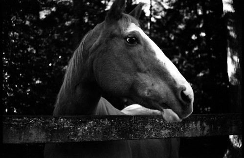 Big Pal in Black & White | by KurtClark