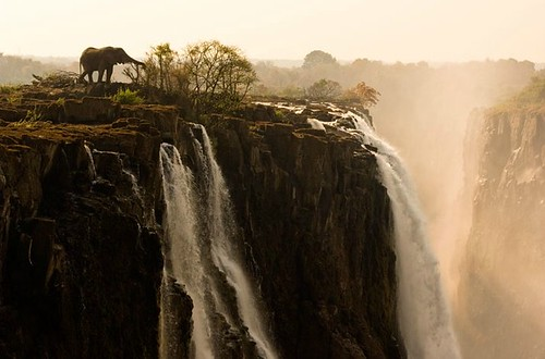 Zambia by Marsel van Oosten | by NatGeo*