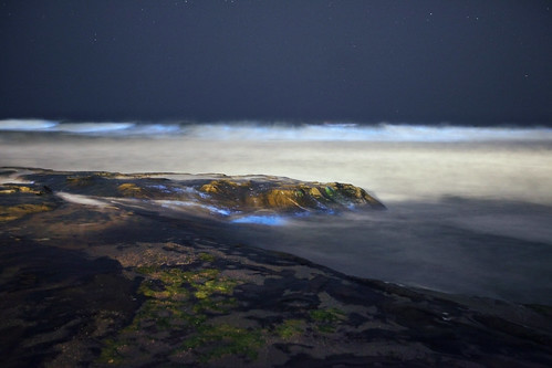 Bioluminescent tide | by It was the light, it was the angle