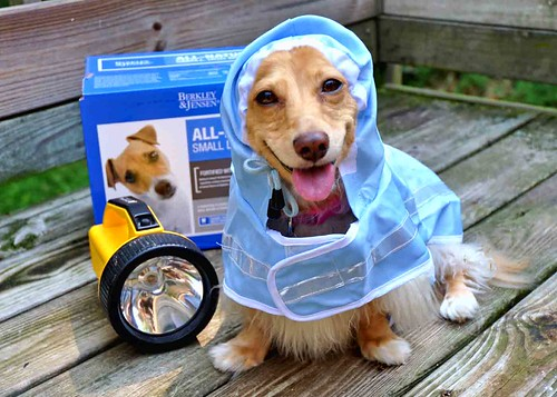 Hurricane Preparedness Doggy Style | by Doxieone