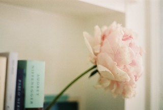 Book Shelves : Peony | by Sam Shorey