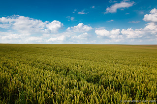 Wheat fields under the clouds | by J. Carlos Roldán