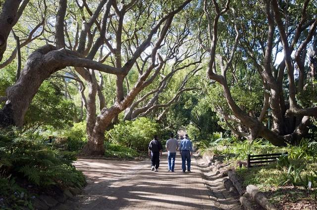 Toursts in Kirstenbosch National Botanical Garden, Western Cape