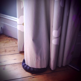 Amazing hiding from our bigger cat, here. Well done. Like a ninja, she is. | by anna pickard