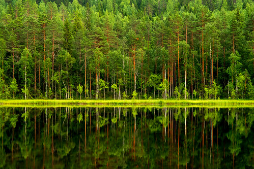 Reflections on Tervalampi | by Petri Karvonen