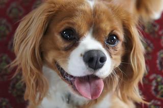 Image result for happy dog flickr