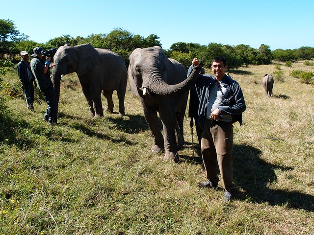 Elephant experience Eastern Cape South Africa
