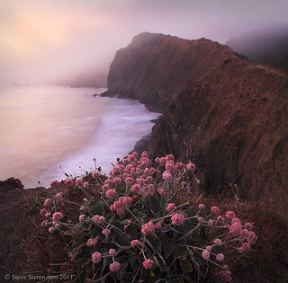 Lost Coast Flowers - Northern California | by Steve Sieren Photography