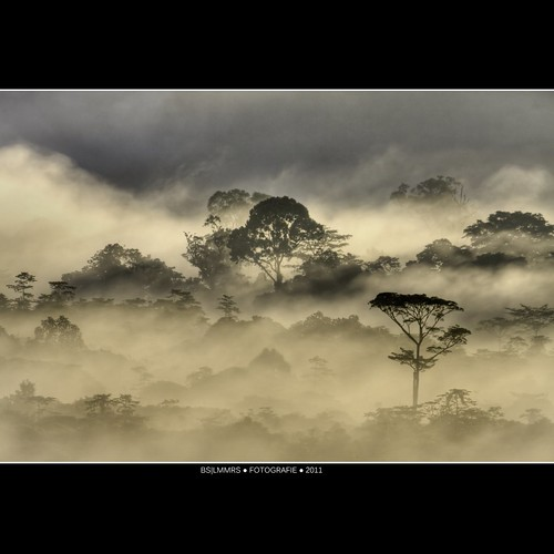 Malaysia: Morning jungle beauty [Explored] | by Bas Lammers