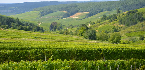 Burgundy 2011 | by The Hungry Cyclist