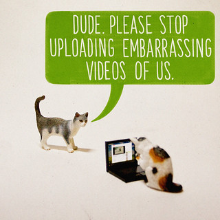 What If Cats Were Using The Internet All Along? | by aledlewis