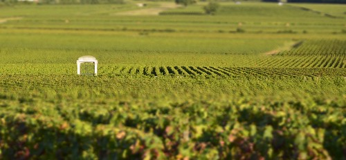 Cote D'Or - Burgundy Harvest 2011 | by The Hungry Cyclist