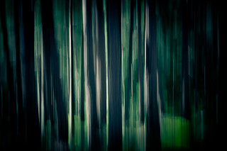 Twilight Forest | by Pierre Pocs
