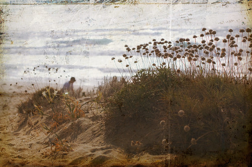 Sardinian beach with flowers. Washed out. | by avotiya