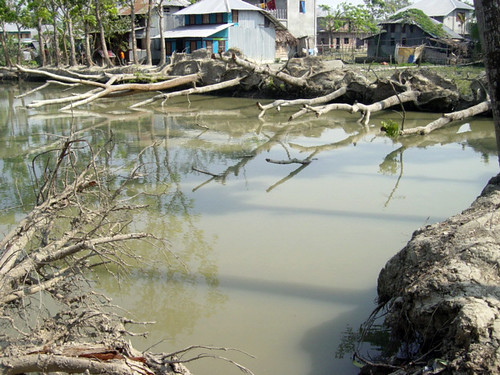 Pond dike damaged by fallen trees, Bangladesh. Photo by WorldFish, 2008