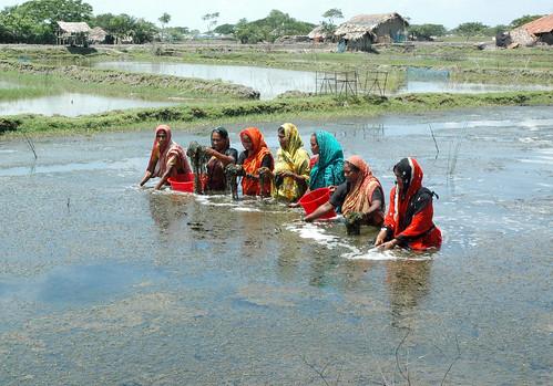 Women in aquaculture, Bangladesh. Photo by WorldFish, 2008